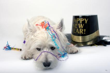 147379-425x282-Pooped-out-party-Terrier